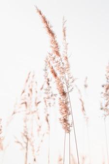 Ramos secos de capim-dos-pampas com fundo natural de sementes graybeige com flores de junco