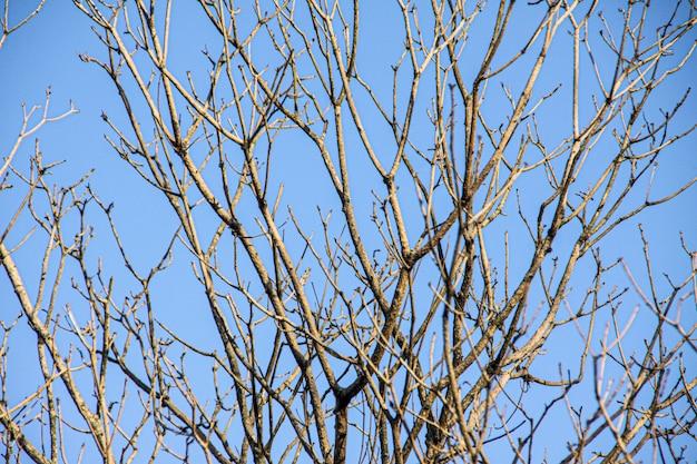 Ramos secos de uma árvore com o céu azul no rio de janeiro.