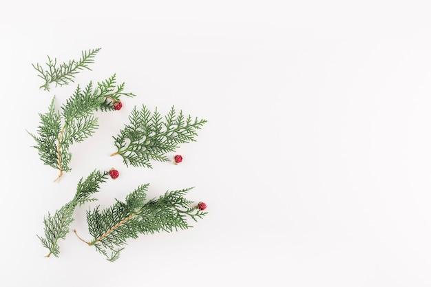 Ramos verdes de coníferas com pequenas flores vermelhas