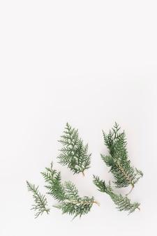 Ramos verdes de coníferas na mesa de luz