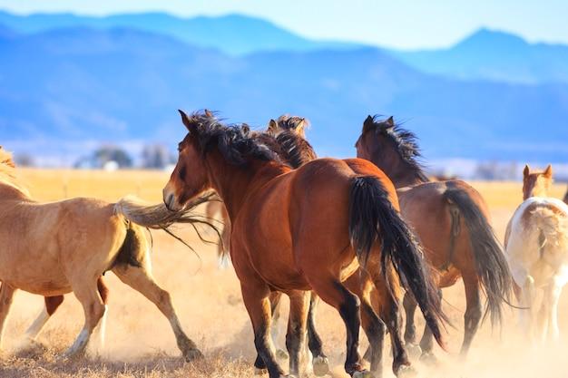Ranch horses gallop away