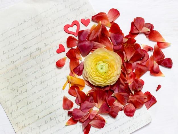 Ranúnculo amarelo flor e pétalas vermelhas com carta manuscrita antiga cópia espaço vista superior na mesa de madeira branca