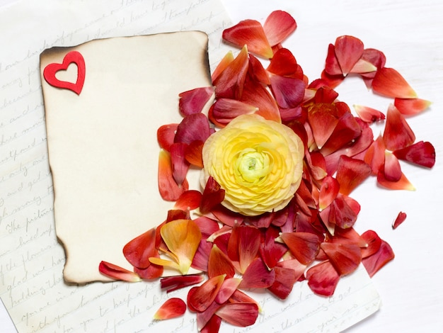 Ranúnculo amarelo flor e pétalas vermelhas com cópia espaço em papel queimado vista superior na mesa de madeira branca