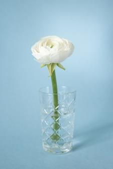 Ranúnculo branco em vaso contra azul pastel Foto Premium