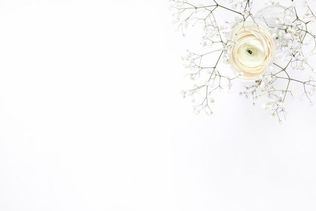 Ranúnculo branco em vaso em branco Foto Premium