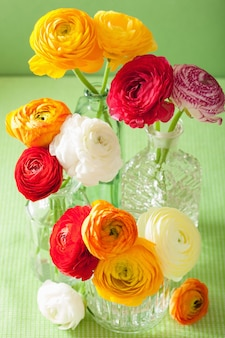 Ranúnculo colorido flores em um vaso sobre fundo verde