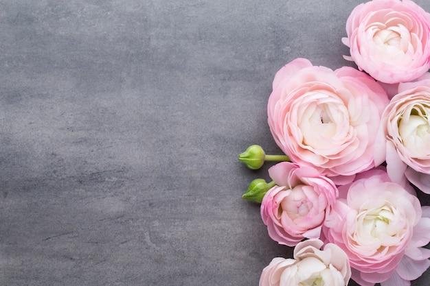 Ranúnculo lindo rosa em fundo cinza.