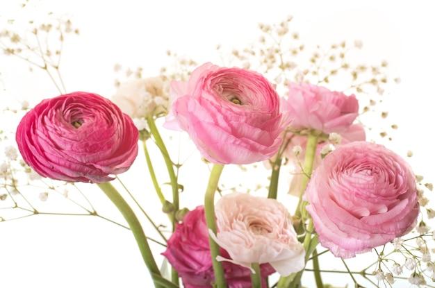 Ranunculus asiaticus rosa