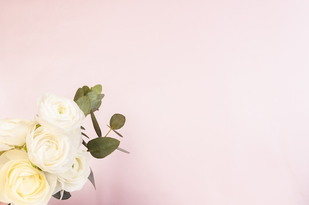 Ranunculus branco