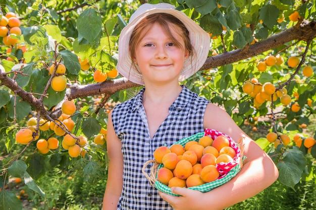 Rapariga bonita é damascos de colheita em um lindo dia de verão