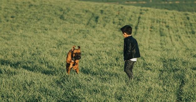 Rapaz pequeno e cão no campo. cão boxer