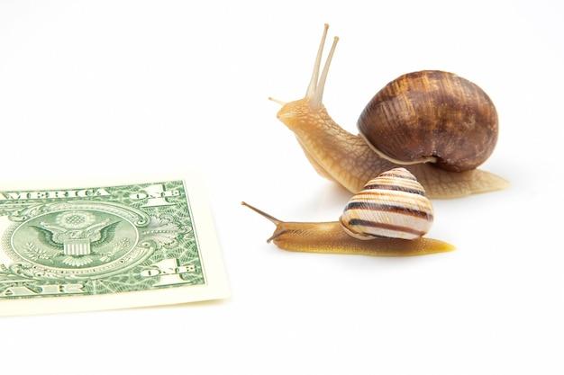Rapidez para alcançar o bem-estar financeiro. os caracóis correm para a linha de chegada com dinheiro.