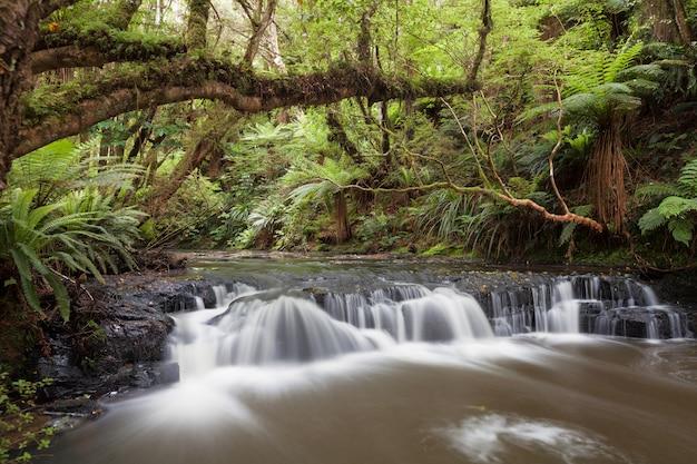 Rápido pequeno, mas bonito, no rio purakaunui, nova zelândia