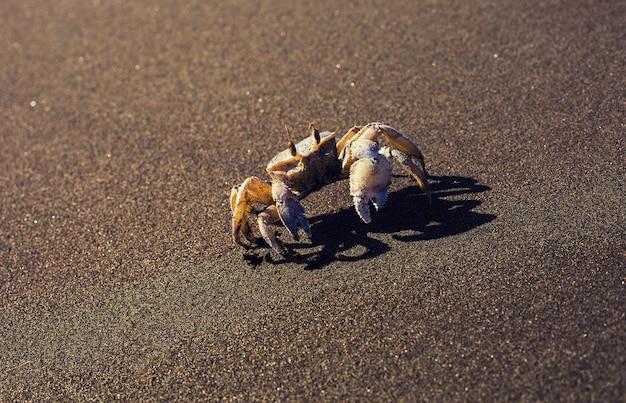 Rastejamento de caranguejo na praia de mar de perto
