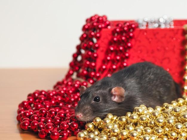 Rat dumbo na frente da caixa com decoração de ano novo, símbolo do ano
