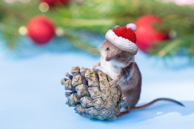 Rato bonitinho no chapéu de natal com pinha floresta.