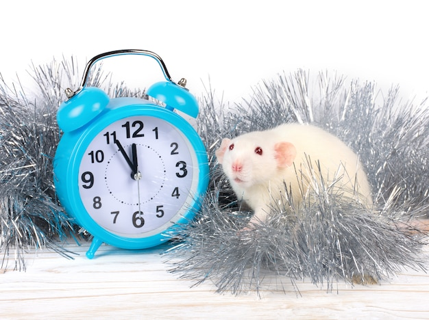 Rato branco como o símbolo do ano do rato do metal branco