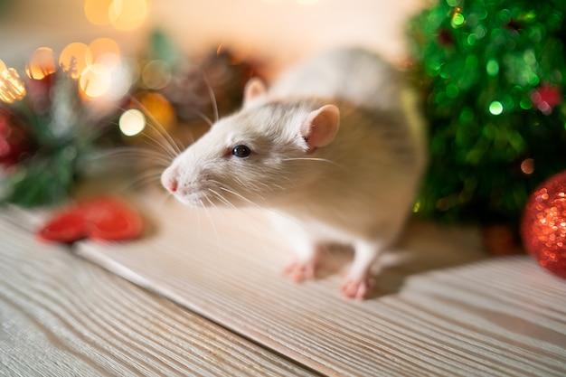 Rato branco em uma árvore de natal