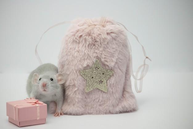 Rato cinza sentado ao lado de um saco de pele rosa e uma caixa de presente.