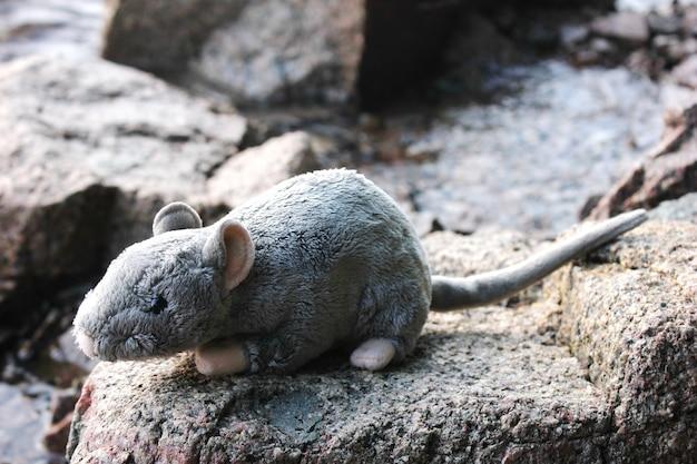 Rato cinzento de brinquedo macio nas pedras