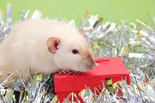Rato com decoração de natal para o ano novo chinês 2020