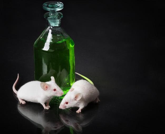 Rato de laboratório branco dois ao lado de um frasco com um líquido verde na superfície de vidro