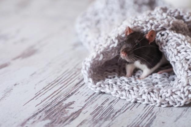 Rato de natal símbolo do ano novo 2020. ano do rato.