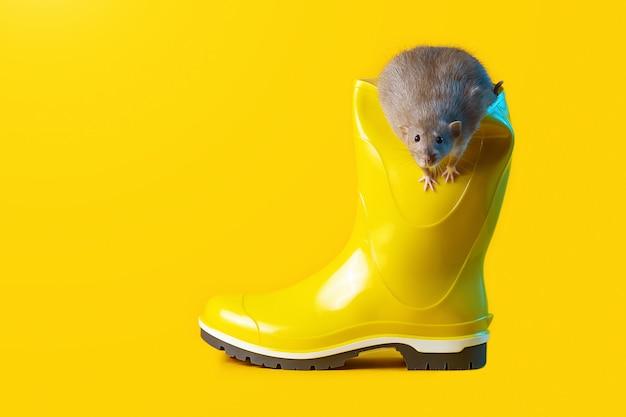 Rato decorativo em bota de borracha amarela brilhante. ano do rato
