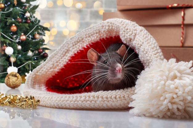 Rato do ano novo chinês com decorações festivas