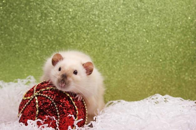Rato e o brinquedo de natal. feliz ano novo. ano do rato 2020