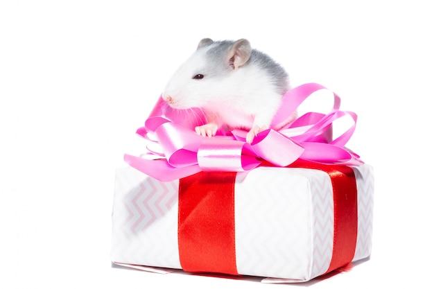 Rato em branco