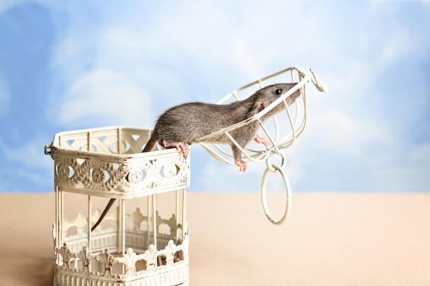 Rato engraçado fofo e gaiola aberta na mesa