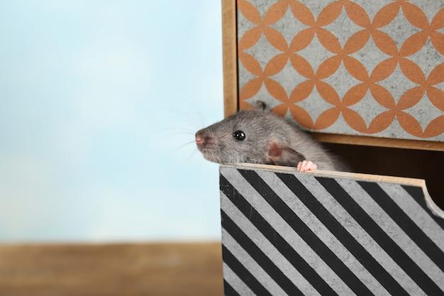 Rato engraçado fofo em uma caixa decorativa na mesa, close-up