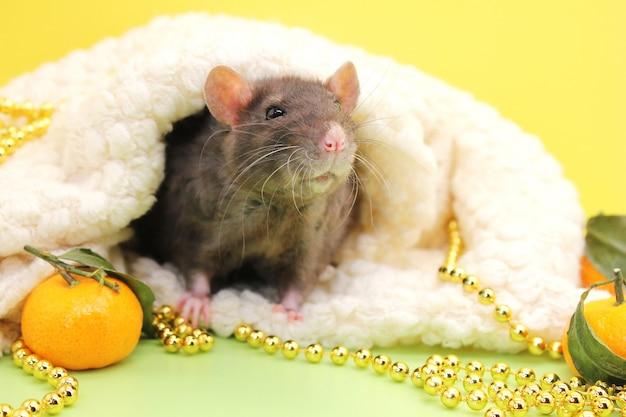 Rato preto entre miçangas e tangerinas