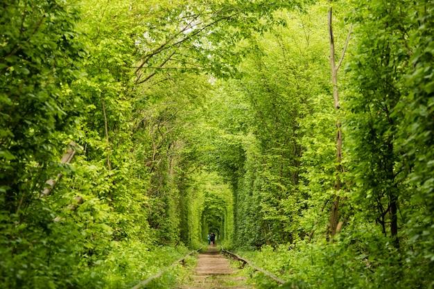 Real maravilha natural amor túnel criado a partir de árvores ao longo da ferrovia ucrânia, klevan