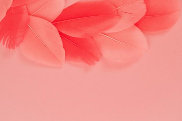 Real penas tendência cor rosa coral