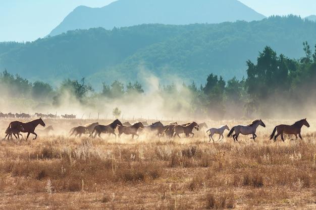 Rebanho de cavalos em pastagem no chile, américa do sul