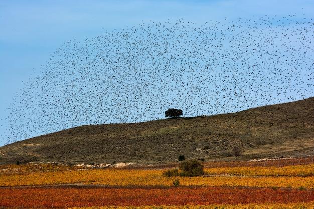 Rebanho de estorninhos migrando, céu e terra
