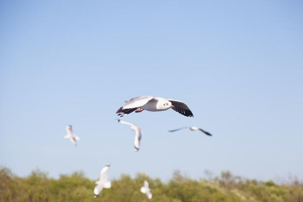 Rebanho de gaivotas