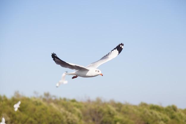 Rebanho de gaivotas Foto Premium