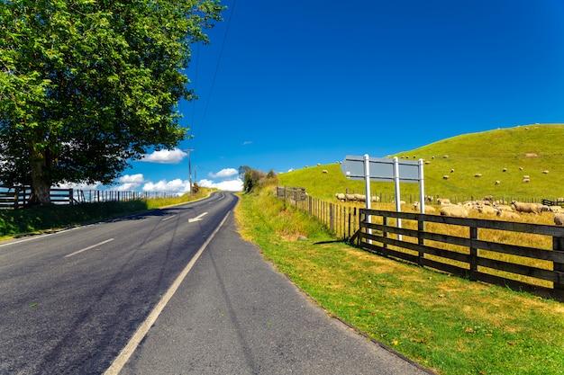 Rebanho de ovelhas da nova zelândia pastando na bela colina verde perto da estrada
