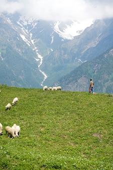 Rebanho de ovelhas e um pastor nos campos