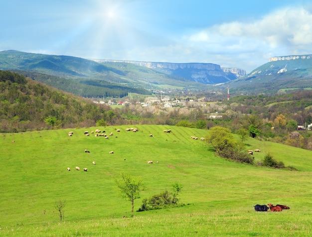 Rebanho de ovelhas na colina perto da aldeia