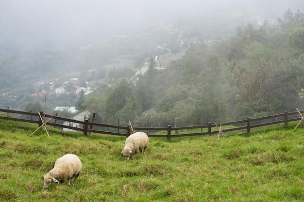 Rebanho de ovelhas no pasto verde. carneiros que comem a grama na natureza no prado.