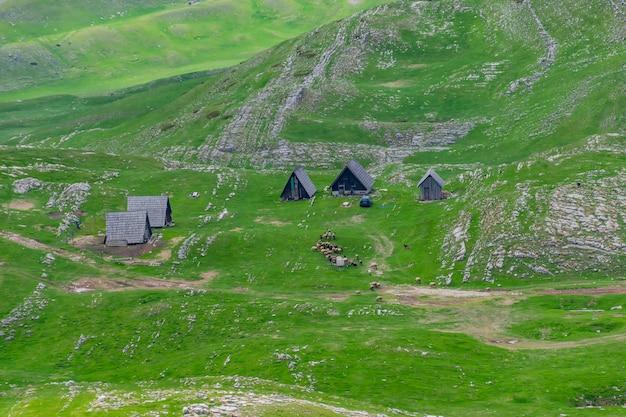 Rebanho de ovelhas pastando em um prado verde da montanha