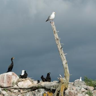 Rebanho pássaros, em, costa, lago, de, a, madeiras, ontário, canadá