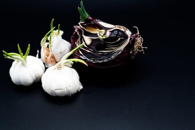 Rebento de alho e cebola shallot crescendo como nova vida, agricultura orgânica