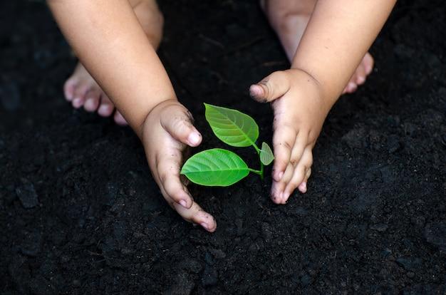 Rebento de árvore baby hand no chão escuro, o conceito implantado infantil