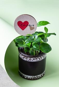 Rebento jovem de uma árvore de café com chapéu de coco do amor. conceito de cafeteria. conceito de amor ou dia dos namorados.