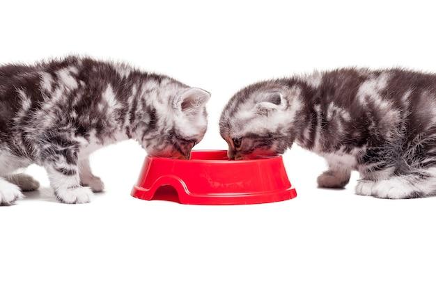 Recarregando sua energia. dois gatinhos comendo comida de gato em uma tigela enquanto estão sentados um na frente do outro